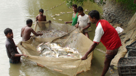 Blockchain traceability can increase the value of fish products among product-conscious customers, allowing our aquaculture farmers to receive the correct value for their hardwork. Photo: TBS