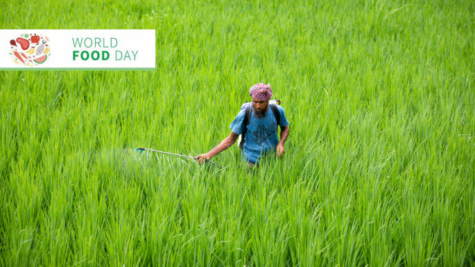 Post-pandemic hunger and food security: Innovation and resilience in Bangladesh